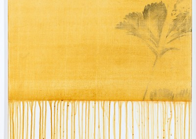 from DAO-serie; 2014 – 2015, pflanzensaft (alchemilla vulgaris, frauenmantel), gummiarabicum, kohle, 60 x 60 cm